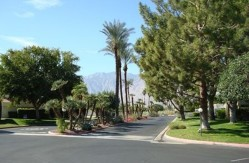 Palm Springs for dog walking