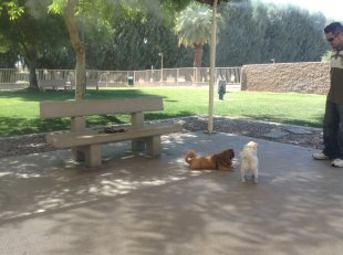 dogs at the park in Palm Desert