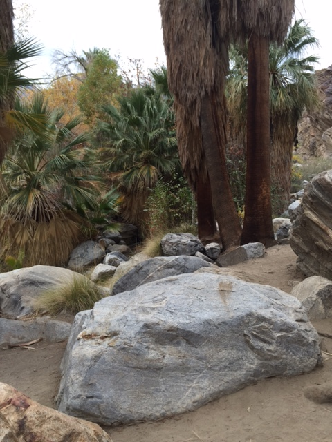 Dog Hikes in Palm Springs